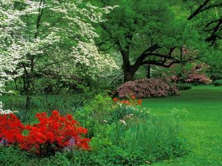 обои Весна цветет у парка фото