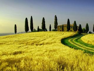 обои Вильнула полевая дорога среди желтого поля фото