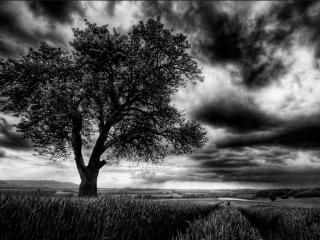 обои Мрачный пейзаж с одиноким летним деревом фото