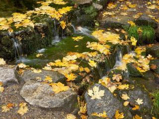 обои Желтая листва на ступеньках ручья фото