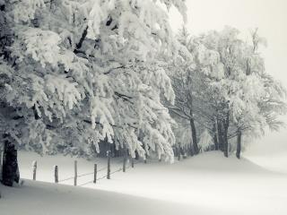 обои На краю зимнего леса фото