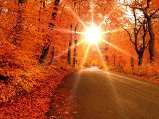 обои Над дорогой осенней солнышко с лучами фото