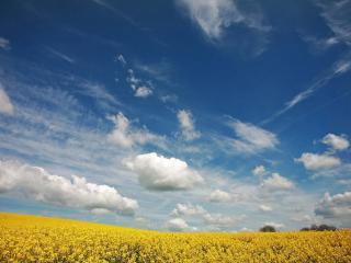 обои Небо с облаками над желтым пoлем фото