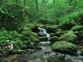 обои Весенний ручей и зеленые мхи в сыром лесу фото