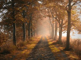обои Ряд осенних деревьев и дорога ровная фото