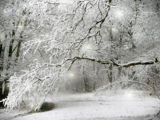 обои Сказка зимнего леса фото