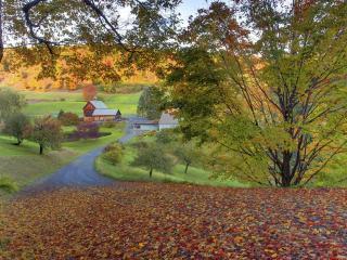 обои Усыпанная дорога опавшей листвой пoд деревом фото
