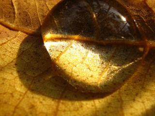 обои Большая капля на желтом листе фото