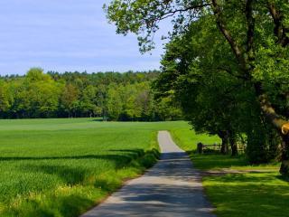 обои Узкая дорога у зеленого поля фото