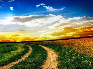 обои Поворот грунтовой дороги у пшеничного поля фото