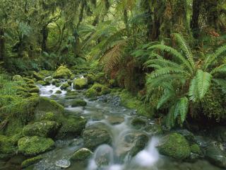 обои Речка в сыpых тропиках фото