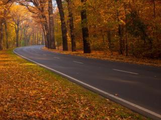 обои Асфальтированная дорога через осенний лес фото