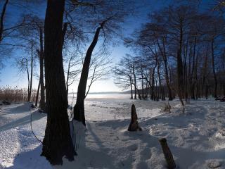 обои Зима на опушке леса фото
