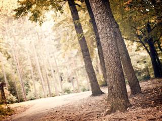 обои Дорожная развилка в лесу фото