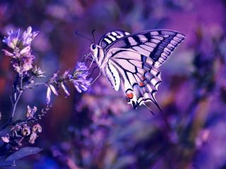 обои Красивая бабочка на цветке фото