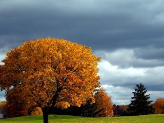 обои Желтые кроны осенних деревьев осенью в поле фото