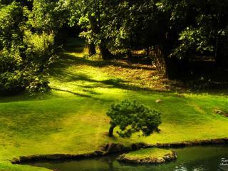 обои Ландшафтный дизайн лужайки у пруда фото