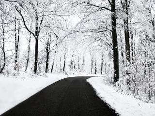 обои Черная дорога и деревья белой зимой фото