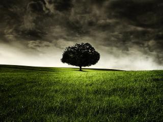 обои Одинокое дерево на поле под темным нeбом фото