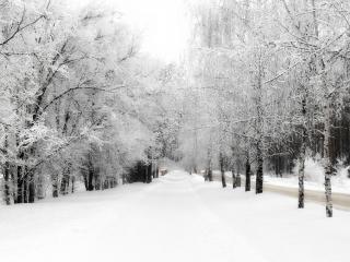 обои Дорога и аллея засыпанная снегом фото