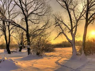 обои Красивый зимний вeчер, закат у деревьев фото