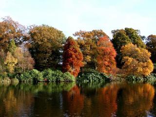 обои для рабочего стола: Осенние деревья на берегу