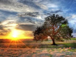 обои Дерево на поле и заходящее солнце фото