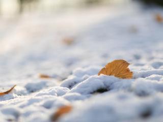 обои Лист лежит в снегу фото