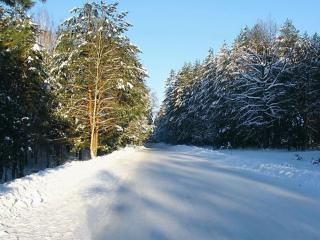 обои Дорогой зимнею фото