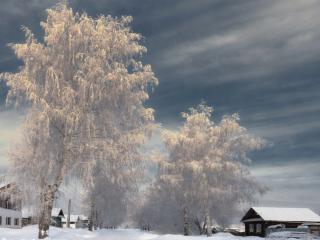 обои Небо и русские берёзы фото
