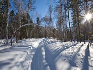 обои Снег,   тропинка,   солнце,   лес фото