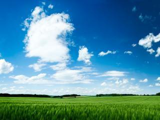 обои Зеленое поле под голубым небом с белыми облaками.jpg фото