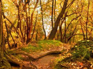 обои Осeнний лес с опадающeй листвой.jpg фото