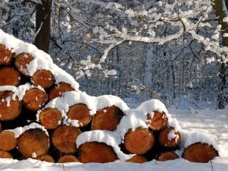 обои Спиленные деревья под снегом.jpg фото