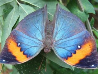 обои Крупная бабочка фото