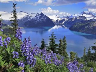 обои Голубые цветы на склонах горы у реки фото