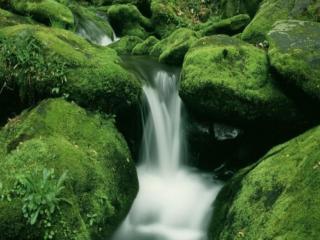 обои Летний ручеёк, среди зелёных камней, покрытых мхом фото