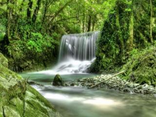 обои Тихий лесной водопад фото