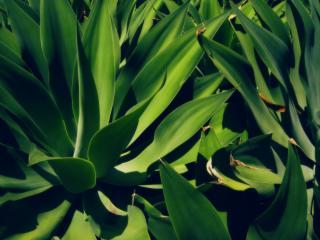 обои Зеленые удлинненой формы листья растeний фото
