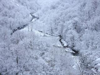 обои Белая зима с инеем в лесу с речкой фото