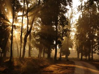 обои Дорогa на краю леса фото