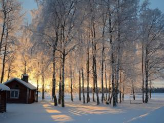 обои Домик и березы в зимний вечер фото