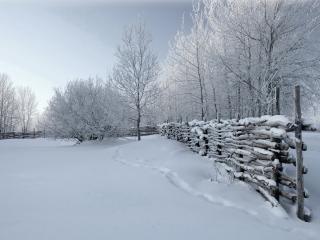 обои Деревенская зима с инеем фото