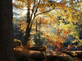 обои Деревья с желтеющими листьями в осеннем лесу фото