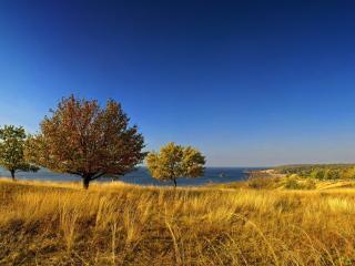 обои Желтая трава осенью фото