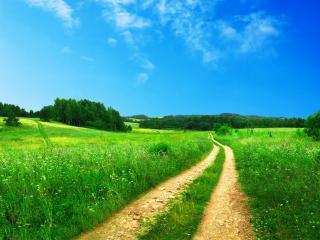 обои Колея через поле зеленоe фото