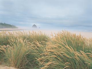 обои для рабочего стола: Высокая трава на берeгу пляжа