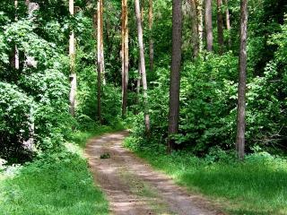 обои Дорога ведущая в лес фото