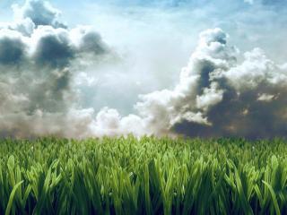 обои Поле высокой травы фото