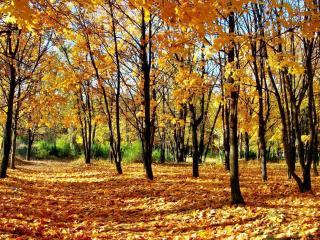 обои Опадает последняя листва фото